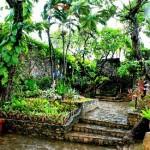 Cebu Botanical Garden (image from focalglass.com)