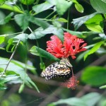 Jumalon's Butterfly Sanctuary (nsportfolio.multiply.com)